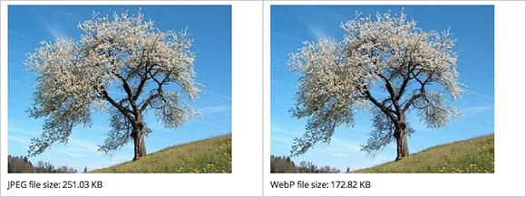 webp-graphics-format