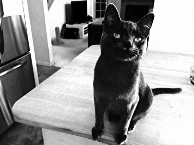 My cat Kiwi, in all his black & white glory