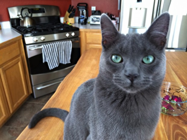 cat glaring at the photographer