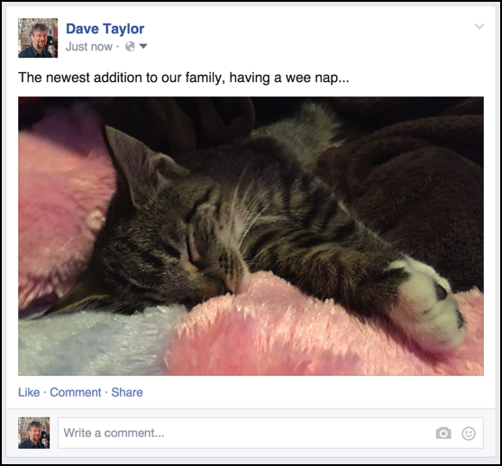 cute kitty picture included in facebook status update post