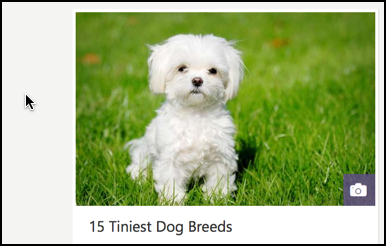 msn.com article on 15 smallest dog breeds