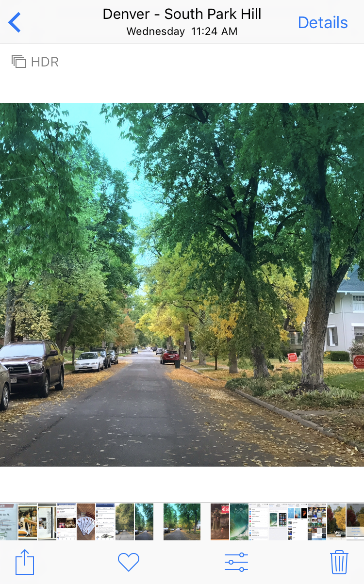 tree lined street, autumn, camera roll photo gallery apple iphone 7