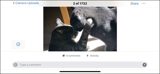 photo cats cute dropbox iphone