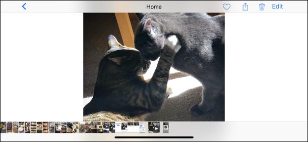 dropbox photo saved exported iphone ipad photos camera roll
