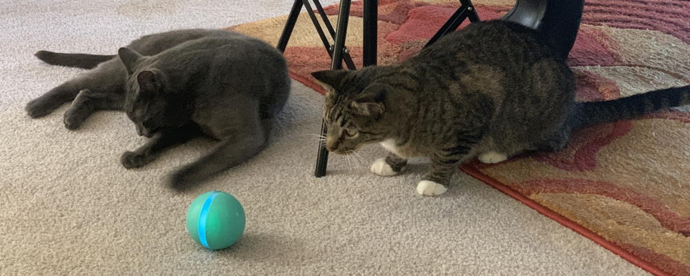 two cats, wicked ball, cheerble