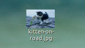 kitten on road jpeg linux desktop