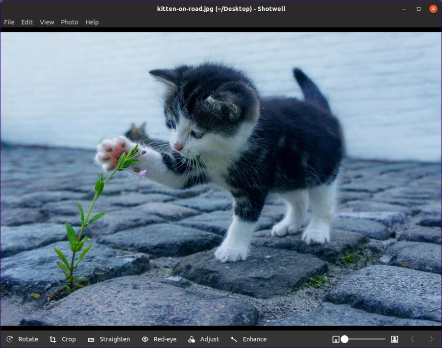 ubuntu linux - shotwell viewer - image with edit features options tools - kitten