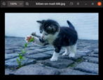resize photos images in ubuntu linux shotwell viewer