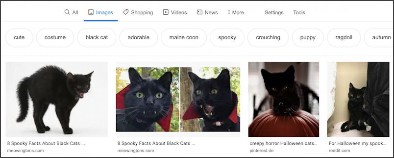 google image search - black kitten - royalty free public domain license - results
