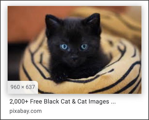 google image search - black kitten - royalty free public domain license - final image size