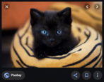royalty free images search find public domain - black kitten
