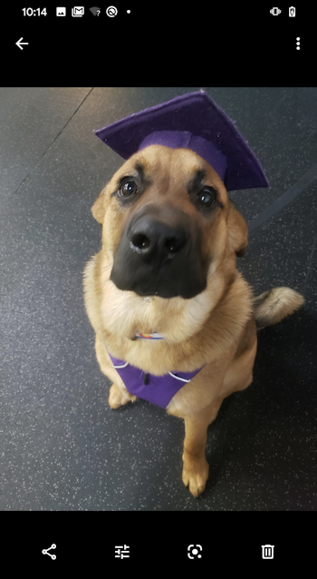 graduate dog - photo on android phone