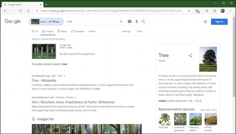 google image search results: trees
