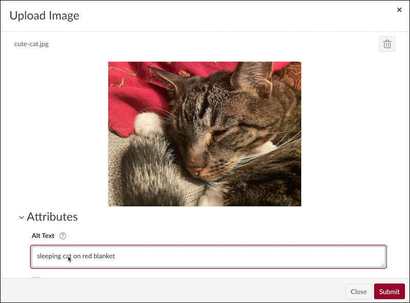 canvas lms rce editor - upload cat photo photograph